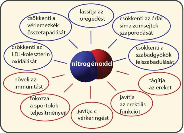A nitrogén-oxid szervezetünk egyik legfontosabb értágító anyaga