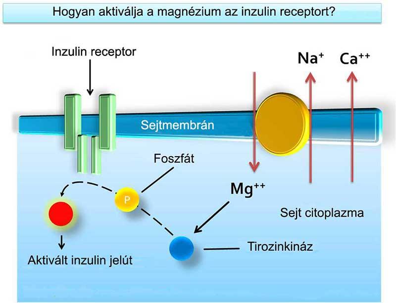 A magnézium és a kalcium-magnézium pumpa