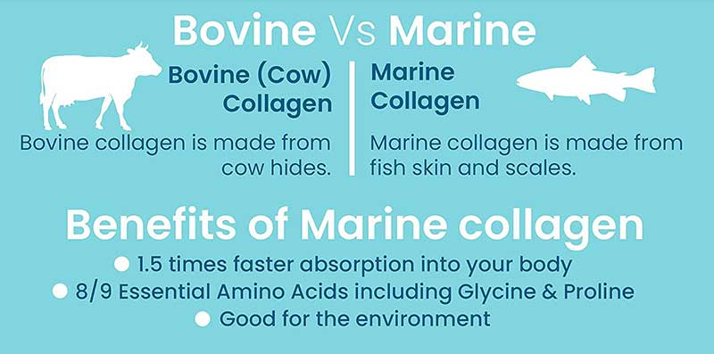 Benefits of Marine Collagen vs. Bovine