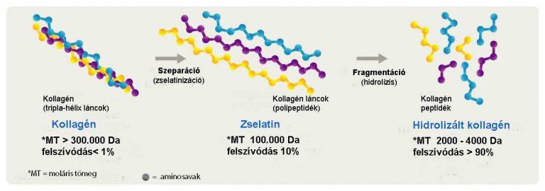 A kollagenpeptidek előállítási folymata