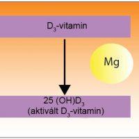 A magnézium aktiválja a D-vitamint